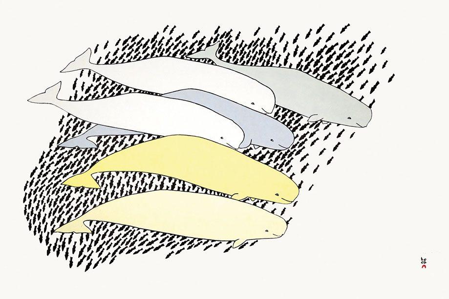 TIM PITSIULAK - Qilalugaq (Beluga) - Stonecut - 61.8 x 97 cm